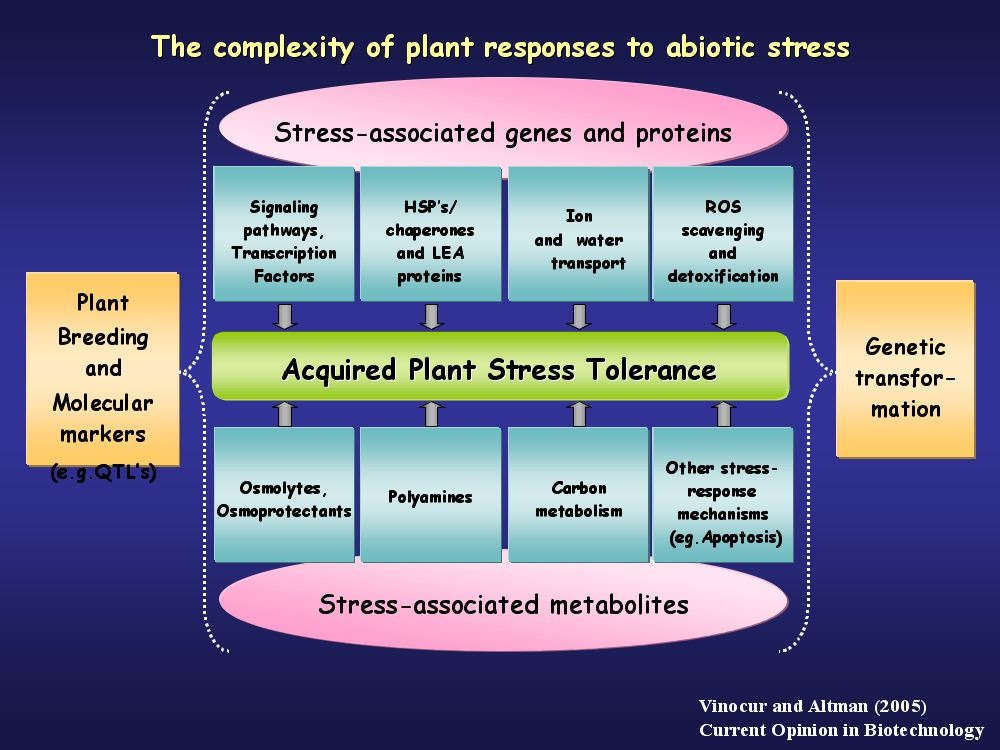 complexity of plant responses to abiotic stress